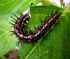 virus worm